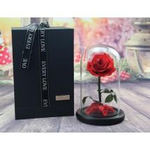"""Вечно цвете Розата """"Красавицата и Звяра"""" Every love YSH I"""