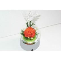 Естествена роза сувенир в стъкленица Ангел с Led св етлина YSH C