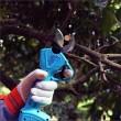 Мултифункционални електрически градинарски ножици TV730 4