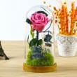 Вечноцъфтяща роза за подарък YSH G 4